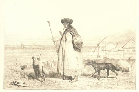 Shepherd with dogs